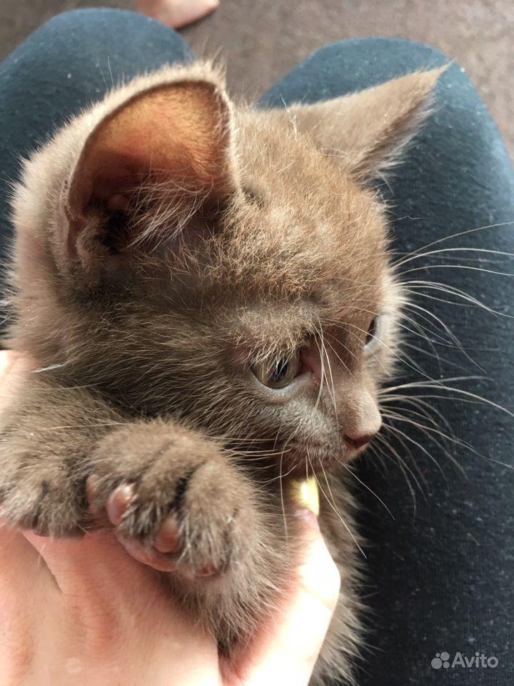 Отдам котёнка бесплатно в Тюмени - фотография № 2