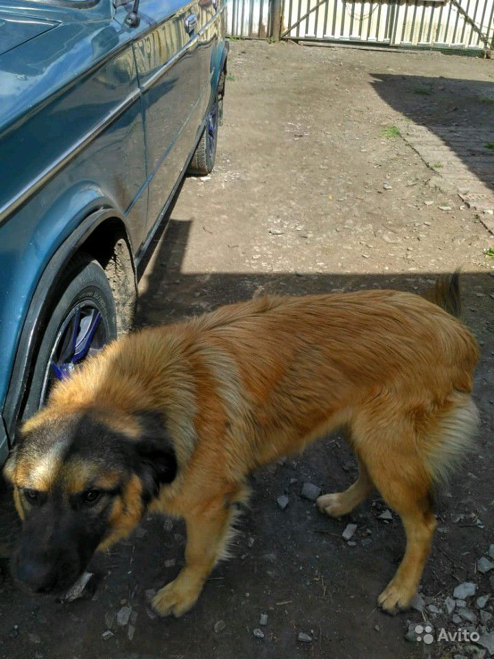 Отдам собак в Омске - фотография № 6
