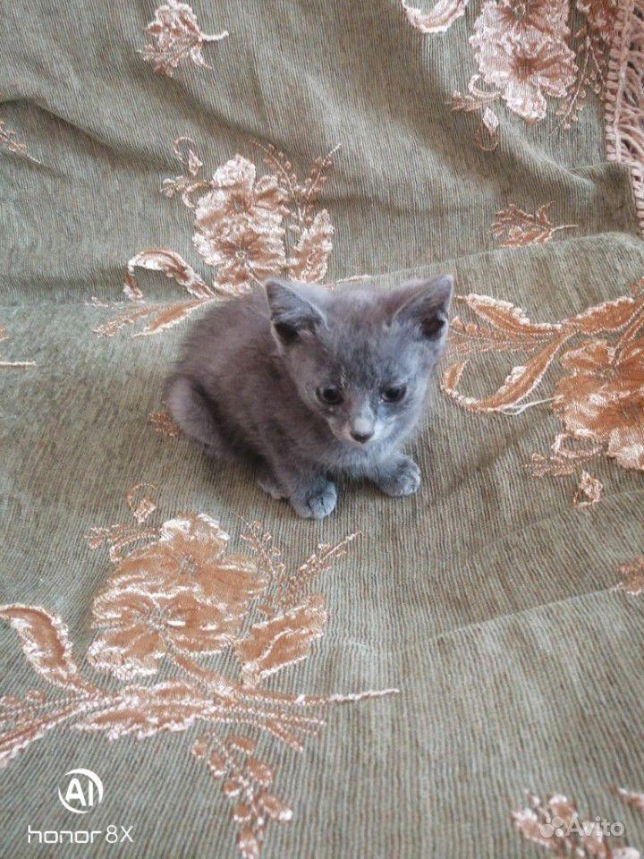 Котятки в добрые руки в Георгиевске - фотография № 3
