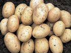 Картошка на еду