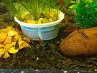 Излишки аквариумной рыбы