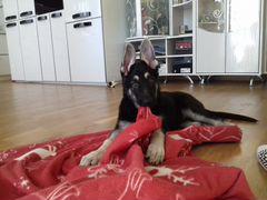 Авито ижевск собаки маленькой породы