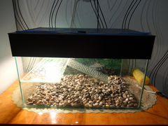 Акватеррариум+черепахи