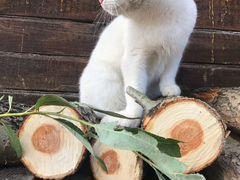 Белый ангел - кот-мышелов