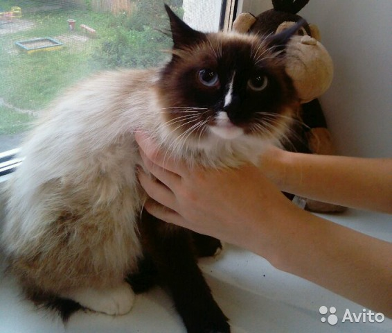 how to get rid of tapeworms in cats home remedy