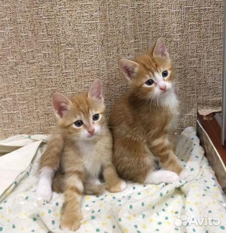 В щербинке объявление отдать в хорошие руки котенка подать объявление на авито о продажа земельного участка