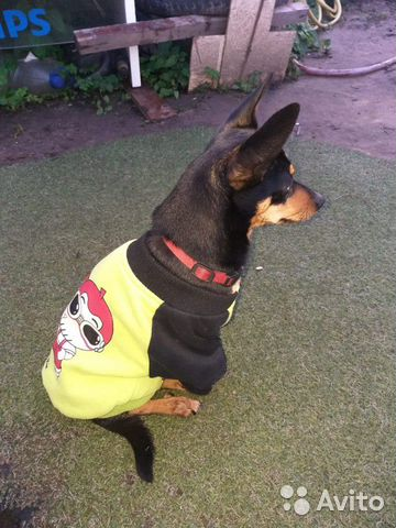 Пропала собака купить на Зозу.ру - фотография № 3
