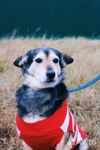 Собака ниже колена в дар купить на Зозу.ру - фотография № 2