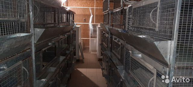 Клетки для птенцов 89171391861 купить 3