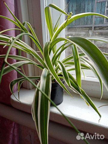 Комнатные растения  89512560859 купить 6