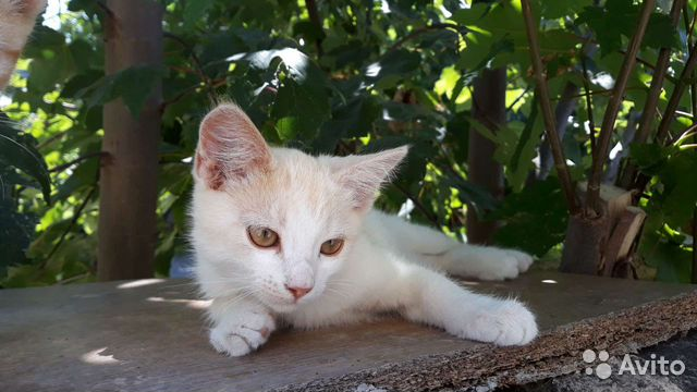 Котята в добрые руки  89787106687 купить 1