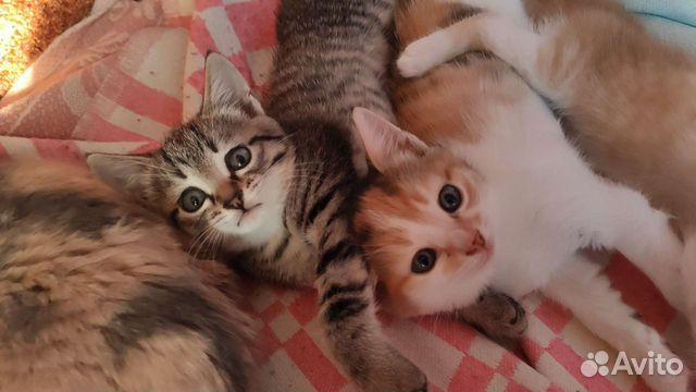 Кошка  89049150343 купить 1