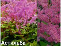 Многолетние растения для тенистых мест