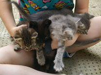 4 котенка