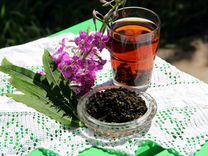 Иван-чай Домашний