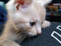 Квартет волшебных котяток в поисках каждый своего