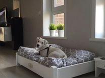 Лежанки, кровати для животных