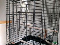 Попугай Карелла(8мес.) С клеткой