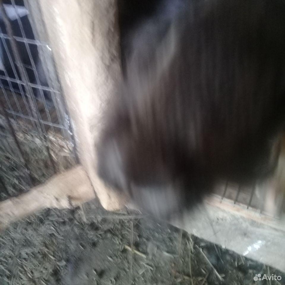 Rabbit  89780050198 buy 5