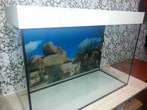 Для черепах и рыбок - -аквариумы в наличии