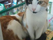 Флая в добрые руки — Кошки в Геленджике